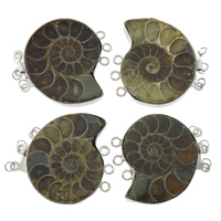 Ammolite Box Clasp, with Brass, Snail, platinum color plated, 3-strand, 37x37x7mm, Hole:Approx 2.5mm, Sold By PC